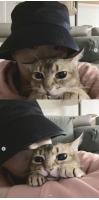 カン・ダニエル、愛猫と優しい日常…カメラを通して伝わる格別な愛情の画像